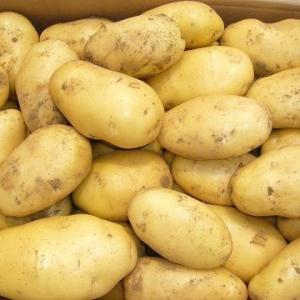 Panel Reverses, Says White Potatoes OK for WIC Recipients
