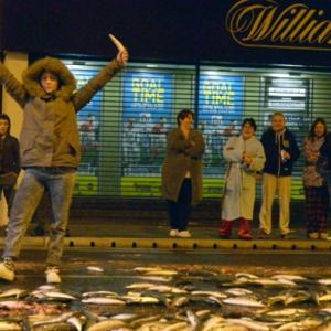 Holy Mackerel! Belfast Warned Not To Eat Free Fish
