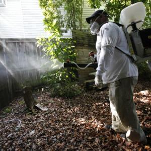 Millions of GMO Insects Could be Released in Florida Keys